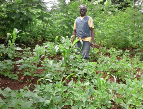 Reportage : Pratique de l'agroforesterie dans le Bamboutos
